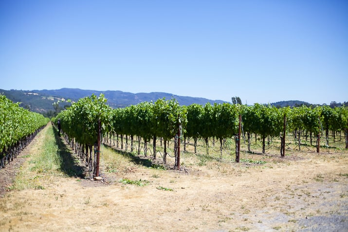 Tips on How to Plan the perfect Napa trip - with advice on where to stay, MUST eat at Restaurants, and the BEST Napa Valley Wineries in town! | joyfulhealthyeats.com