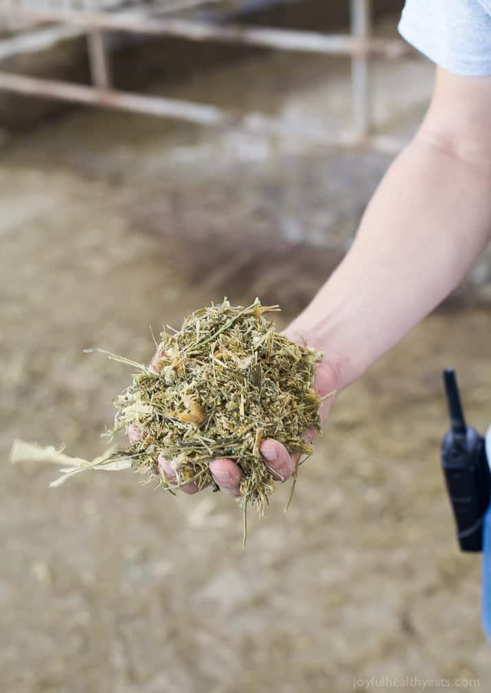 A handful of hay