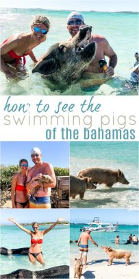 pinterest image for how to visit the swimming pigs in the bahamas