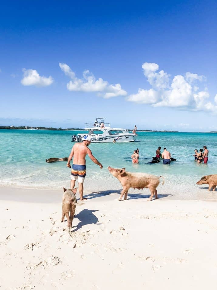 picture of a guy touching the swimming pigs in the bahamas