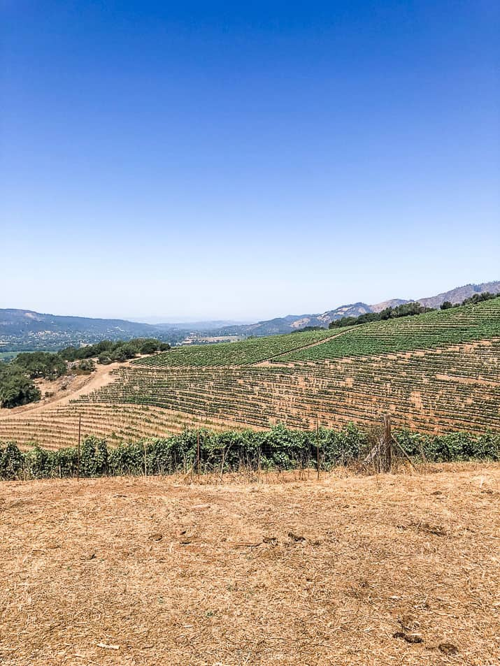kunde family winery in sonoma county